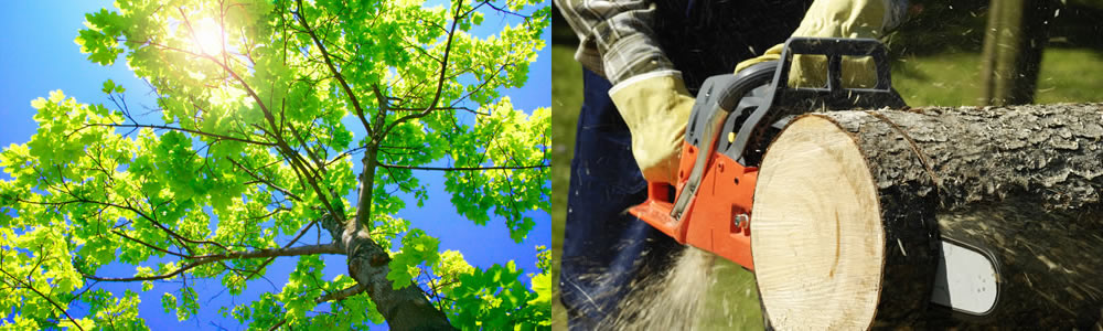 Tree Services Ferndale